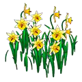 Yellowdaffodils.png