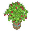 Patioraspberryplant.png