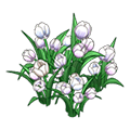 Whitetulips.png