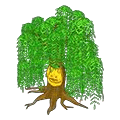 Willowstree.png