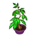 File:Poisonivyplant.png
