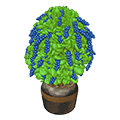 Patioblueberryplant.png