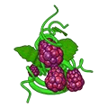 Sapberries.png