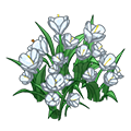 Whitecrocusflowers.png