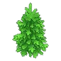 Spectacularspruce.png