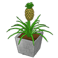 Pineapplepatioplant.png