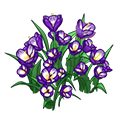 Purplecrocusflowers.png