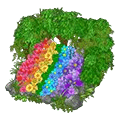 Rainbowflowerdisplay.png