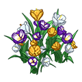 Mixedcrocusflowers.png