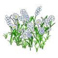 Whitewildflowers.png