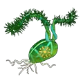 Enchantedevergreensapling.png