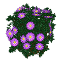 Purplefloweringhedge.png