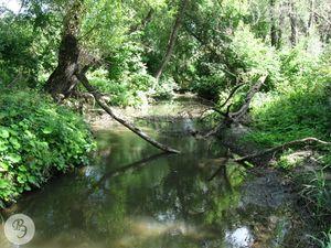 Река Песчанка в районе села Ивано-Кулики