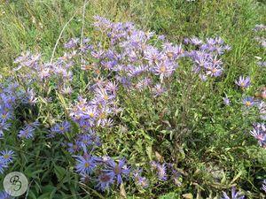 Общий вид цветущего растения